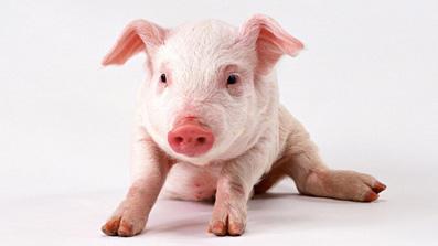 grisefødder