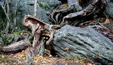 Naturens-åndelige-side-07-Åndsvidenskab-esoterisk-indsigt
