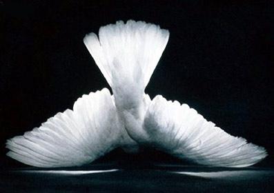 Fred-er-ikke-fravær-af-krig-06-Erik-Ansvang