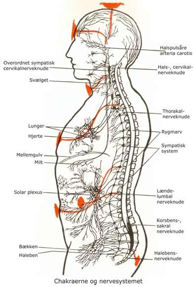 Chakraerne-09-og-nervesystemet-Leadbeater